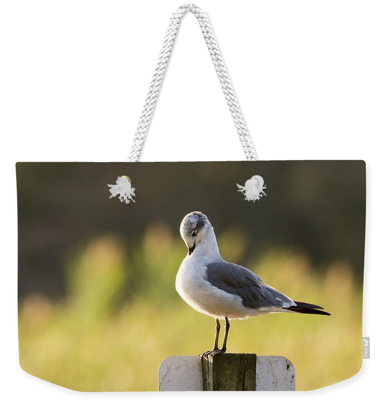 Water Birds Weekender Tote Bag featuring the photograph The Itch by Joan D Squared Photography