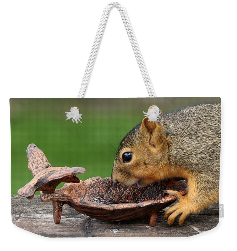 Squirrel Weekender Tote Bag featuring the photograph The Jelly Theif by Lori Tordsen
