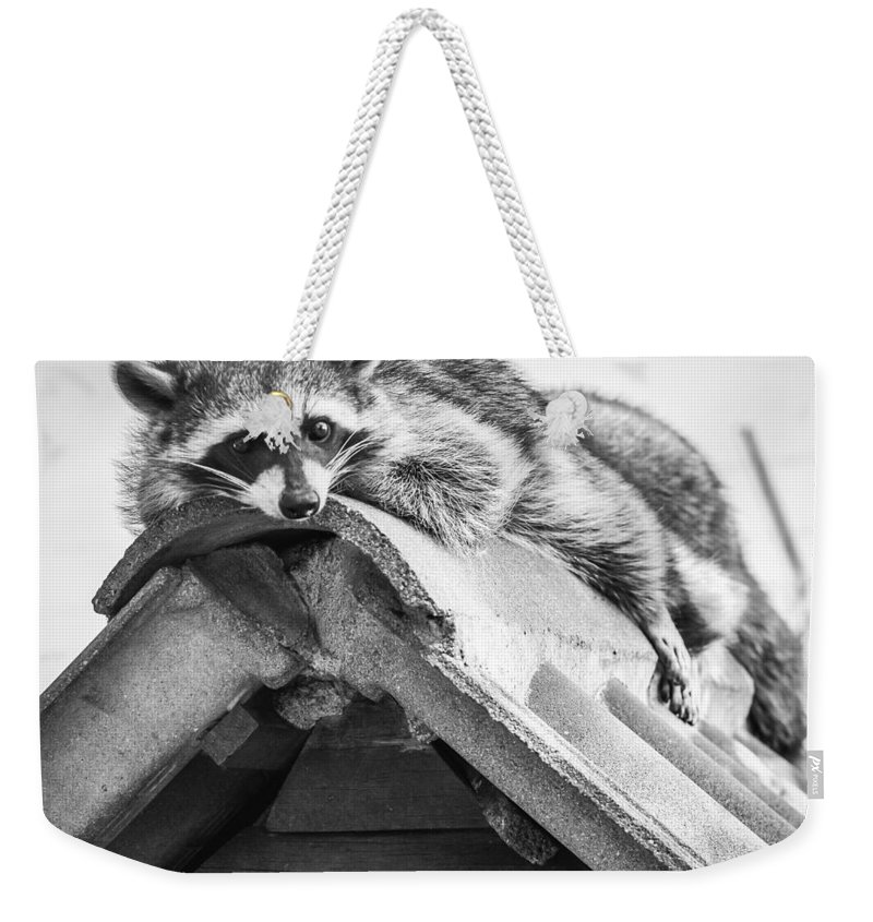 Nature Weekender Tote Bag featuring the photograph The Lazy Being by Sebastiano Secondi