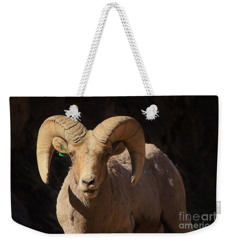 Nature Weekender Tote Bag featuring the photograph The Leader Of The Pack by Tonya Hance