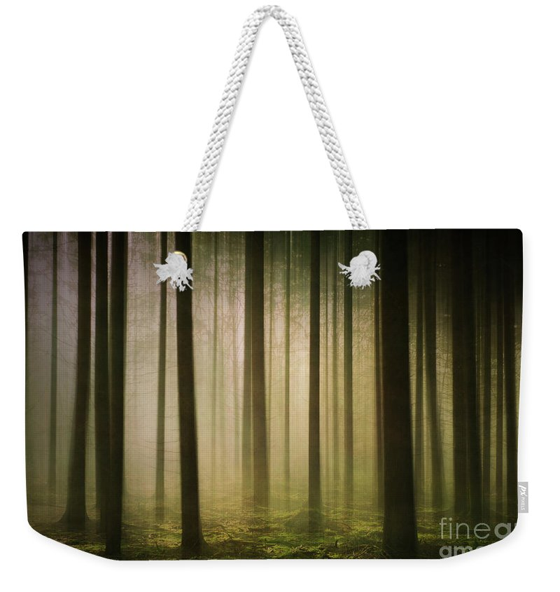 Nature Weekender Tote Bag featuring the photograph The Light In The Woods by David Lichtneker