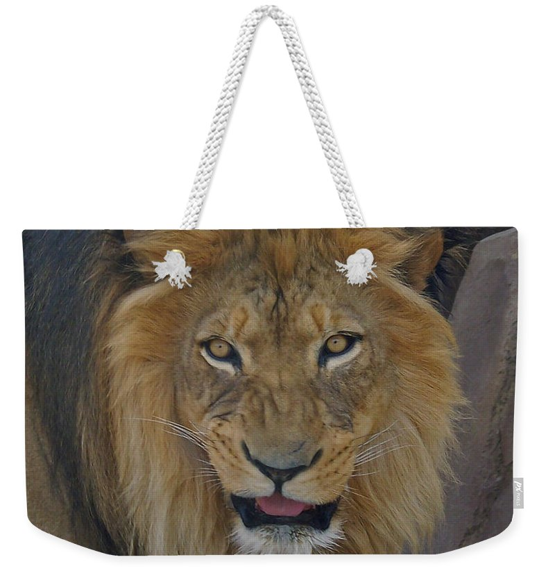 Lion Weekender Tote Bag featuring the photograph The Lion Dry Brushed by Ernie Echols