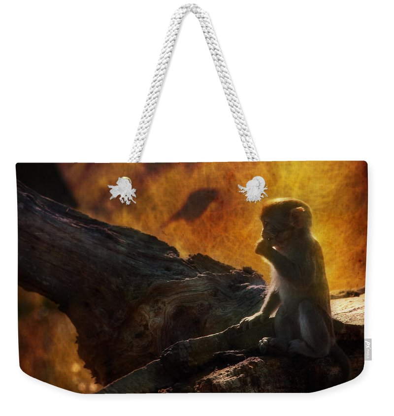 Monkey Weekender Tote Bag featuring the photograph The Little Golumn by Angel Ciesniarska