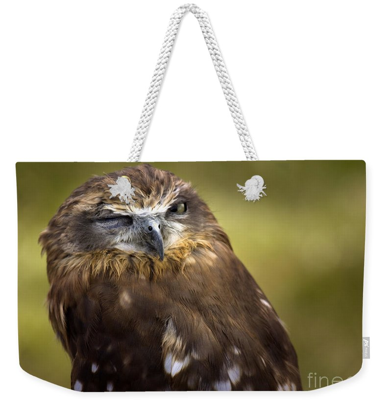 Owl Weekender Tote Bag featuring the photograph The Little Owl by Angel Ciesniarska