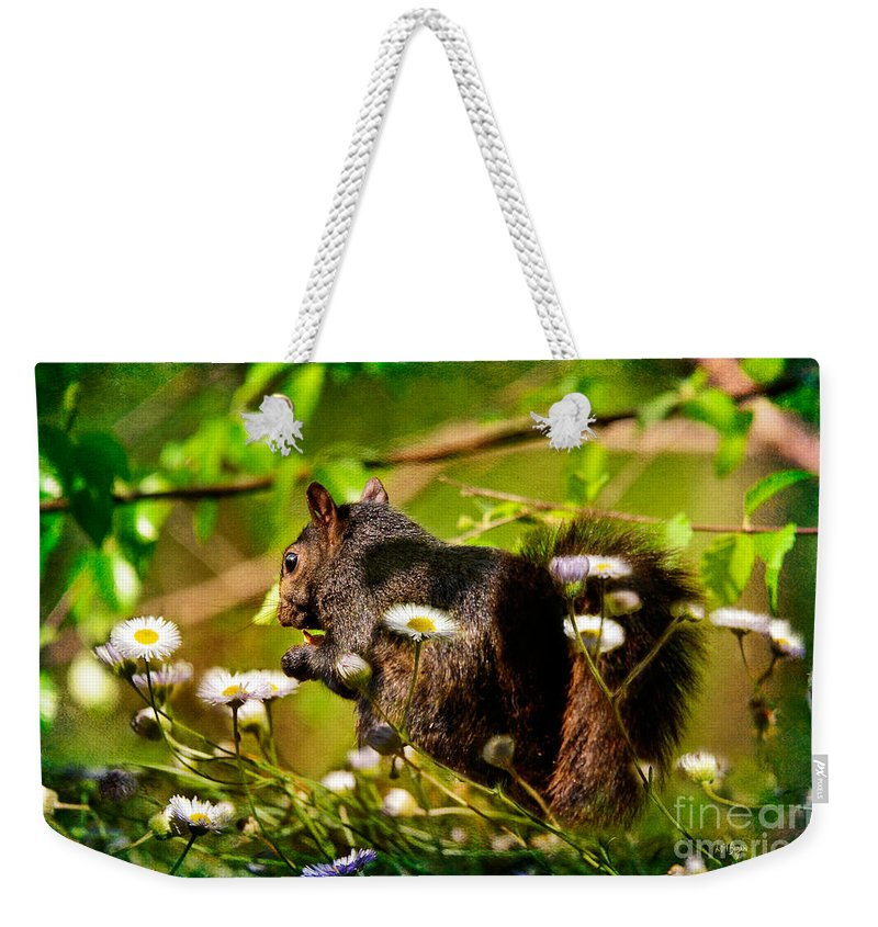 Squirrel Weekender Tote Bag featuring the photograph The Little Things by Lois Bryan