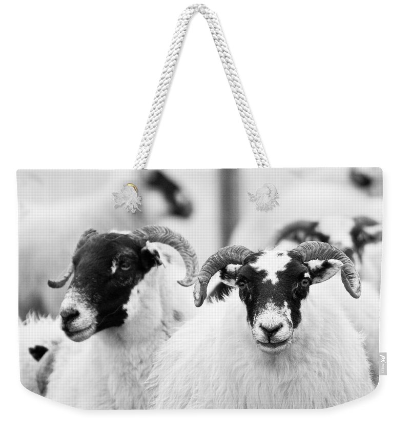 Scotland Weekender Tote Bag featuring the photograph The Locals by Colette Panaioti