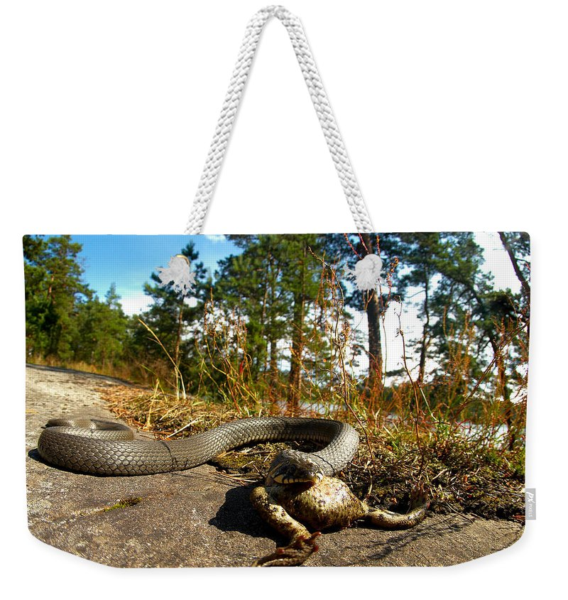 Lehtokukka Weekender Tote Bag featuring the photograph The Lunch Of Grass Snake by Jouko Lehto