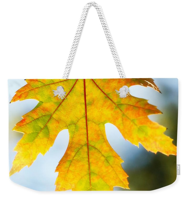 Maple Weekender Tote Bag featuring the photograph The Maple Leaf by Marilyn Hunt