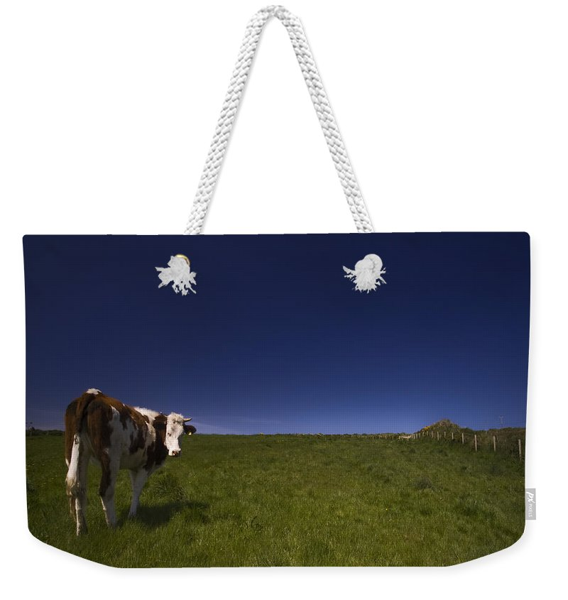 Cow Weekender Tote Bag featuring the photograph The Moody Cow by Angel Ciesniarska