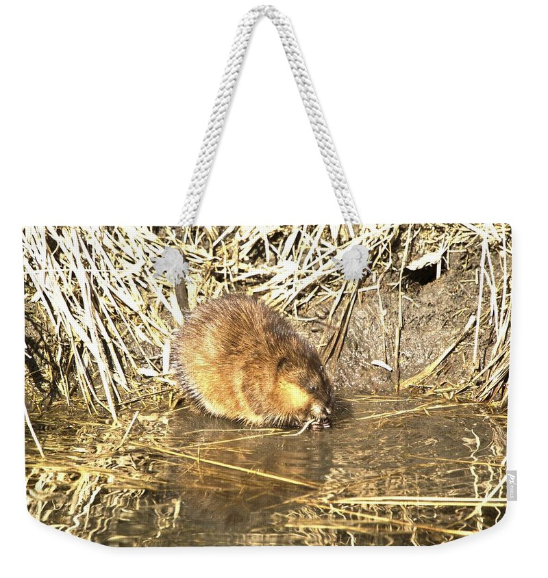 Animal Weekender Tote Bag featuring the photograph The Muskrat by Bonfire Photography