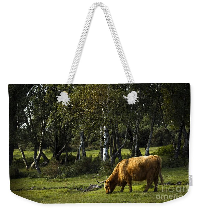 Heilan Coo Weekender Tote Bag featuring the photograph the New forest creatures by Angel Tarantella