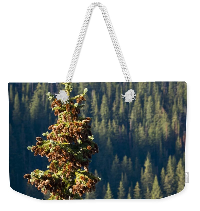 Trees Weekender Tote Bag featuring the photograph The Next Generation by Albert Seger
