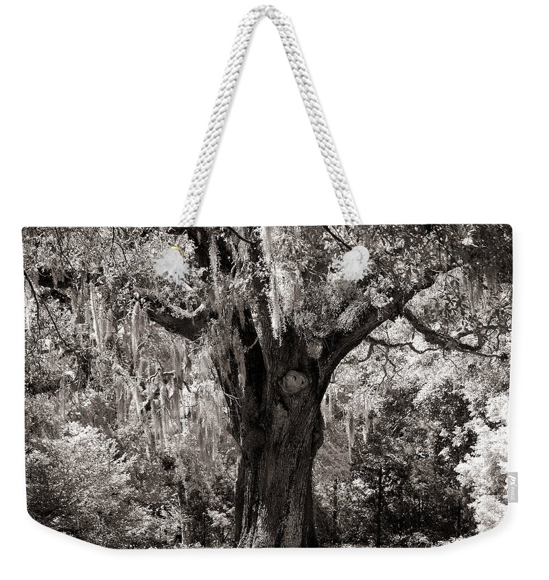 Old Oak Tree Weekender Tote Bag featuring the photograph The Old Oak Is Still Standing by Susanne Van Hulst