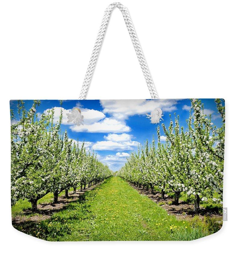 Apples Weekender Tote Bag featuring the photograph The Orchard by Greg Fortier