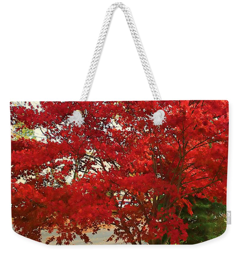 Maple Tree Weekender Tote Bag featuring the photograph The Painted Leaves by Mike Smale