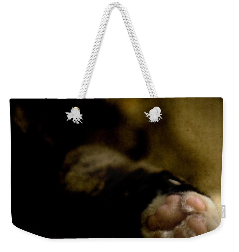 Cat Weekender Tote Bag featuring the photograph The Paw by Angel Ciesniarska