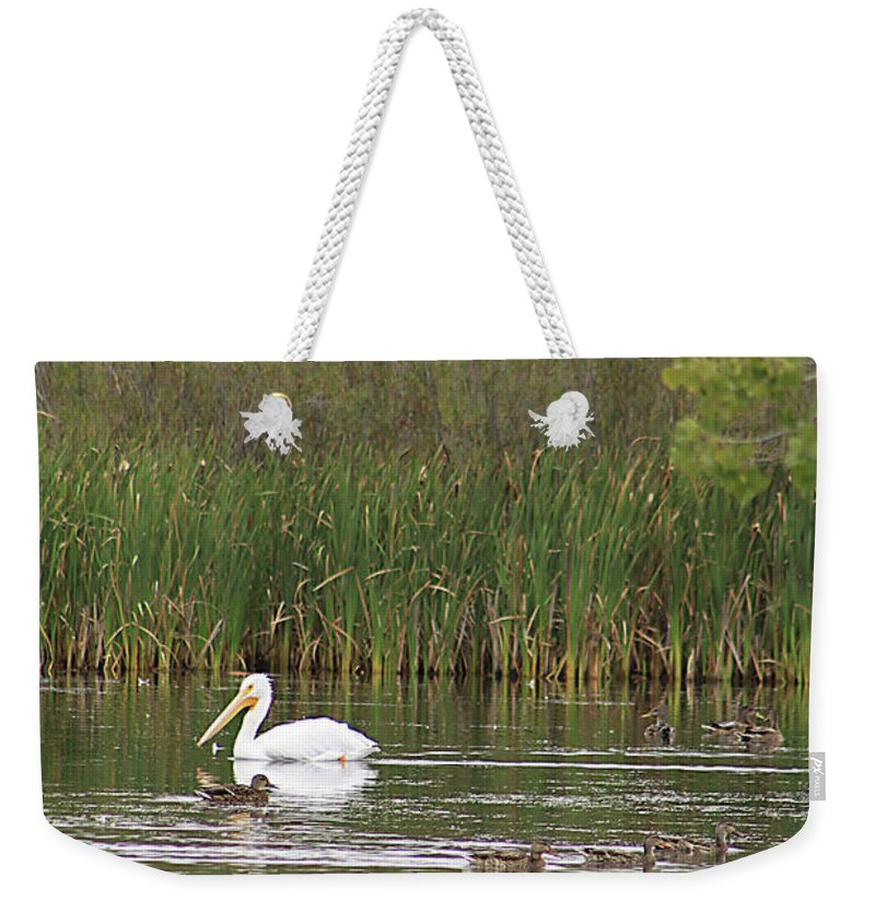 Pelican Weekender Tote Bag featuring the photograph The Pelican And The Ducklings by Alyce Taylor