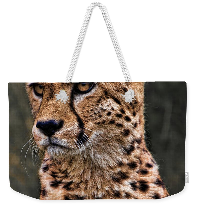 Big Weekender Tote Bag featuring the photograph The Pensive Cheetah by Chris Lord