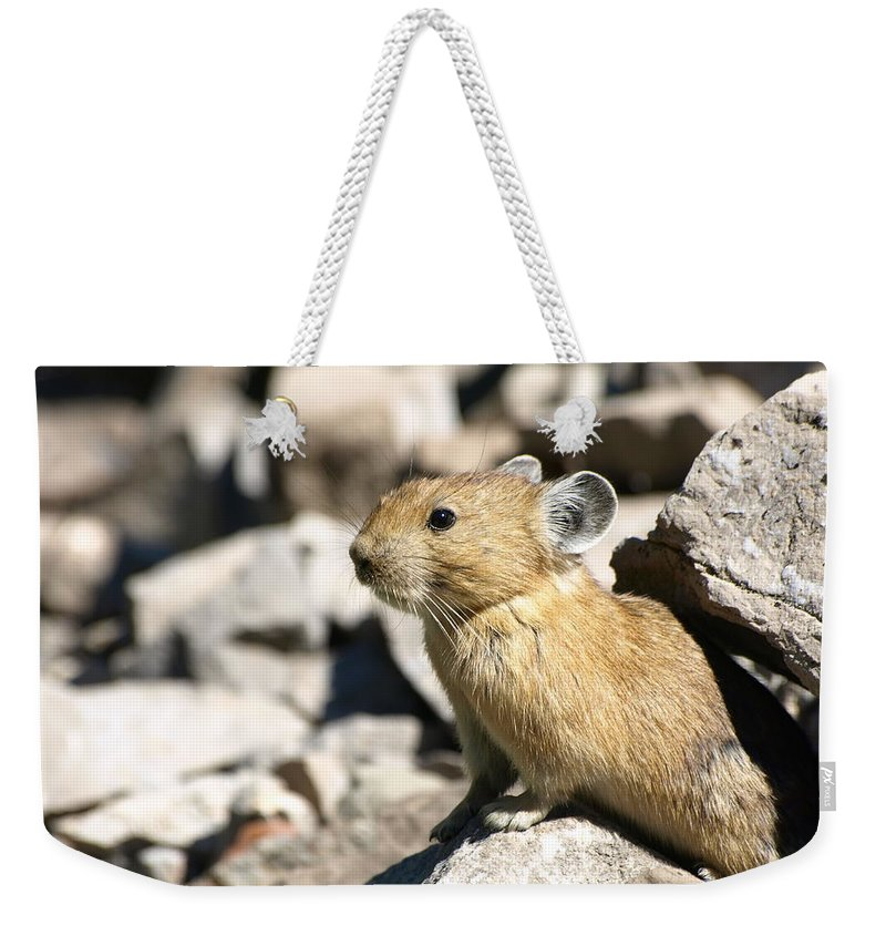 Animals Weekender Tote Bag featuring the photograph The Pika by DeeLon Merritt