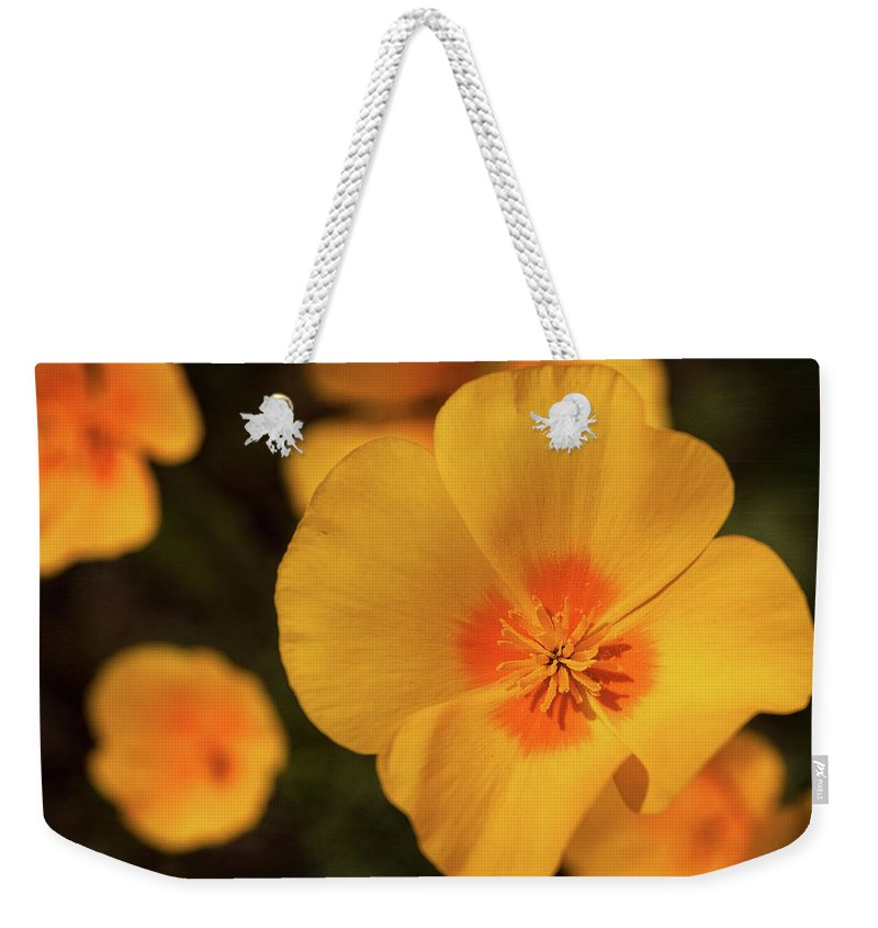 Poppies Weekender Tote Bag featuring the photograph The Poppy by Saija Lehtonen
