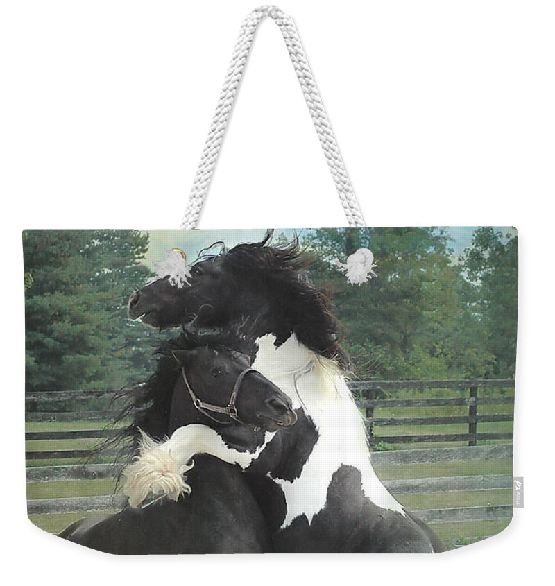 Horses Weekender Tote Bag featuring the photograph The Posturing Game by Fran J Scott