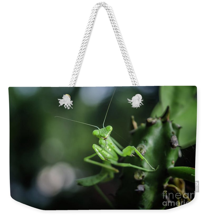 Michelle Meenawong Weekender Tote Bag featuring the photograph The Praying Mantis by Michelle Meenawong