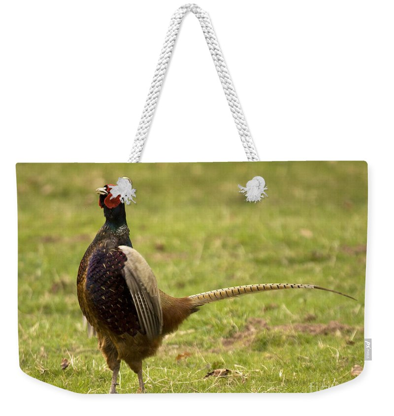 Pheasant Weekender Tote Bag featuring the photograph The Proud One by Angel Ciesniarska