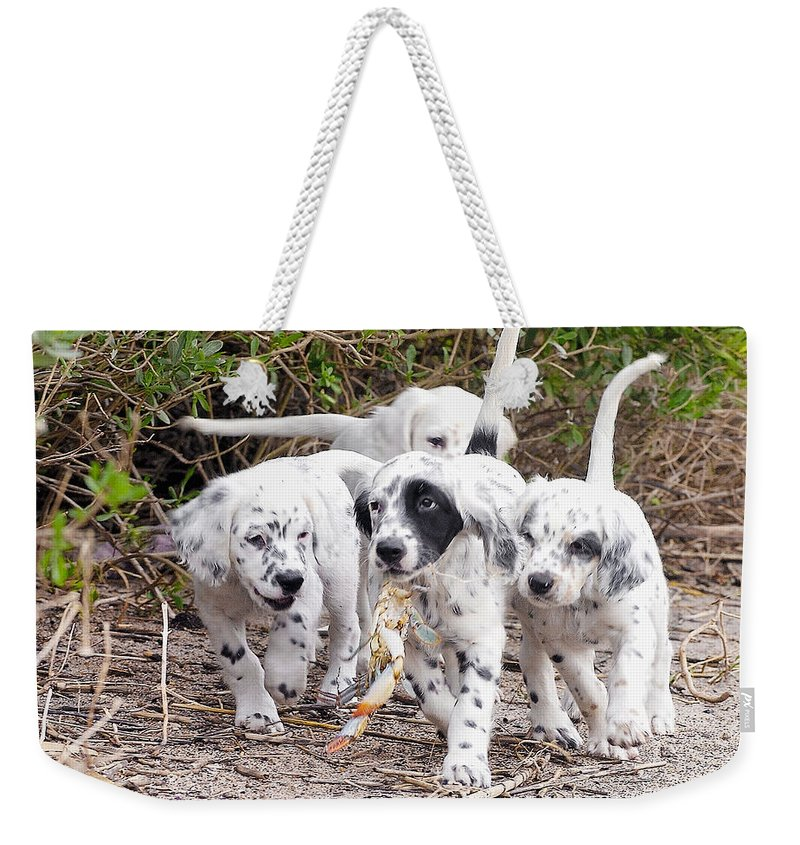 English Setter Weekender Tote Bag featuring the photograph The Puppy's Prize by Scott Hansen