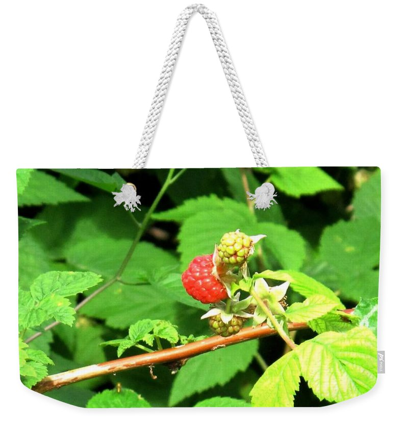 Rasberry Weekender Tote Bag featuring the photograph The Rasberry Patch by Ian MacDonald