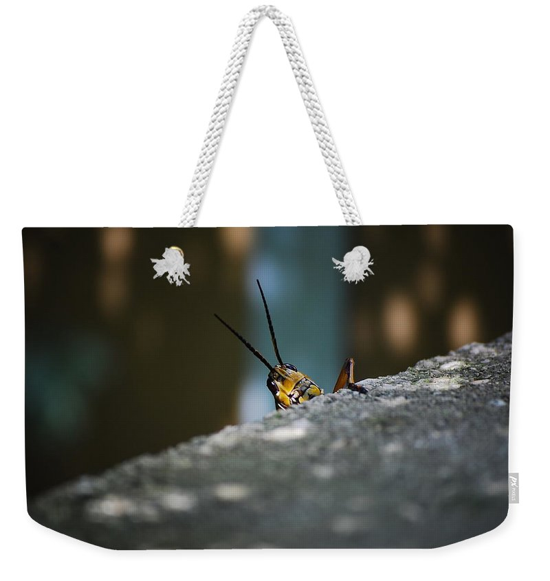 Bugs Weekender Tote Bag featuring the photograph The Real Hopper by Robert Meanor