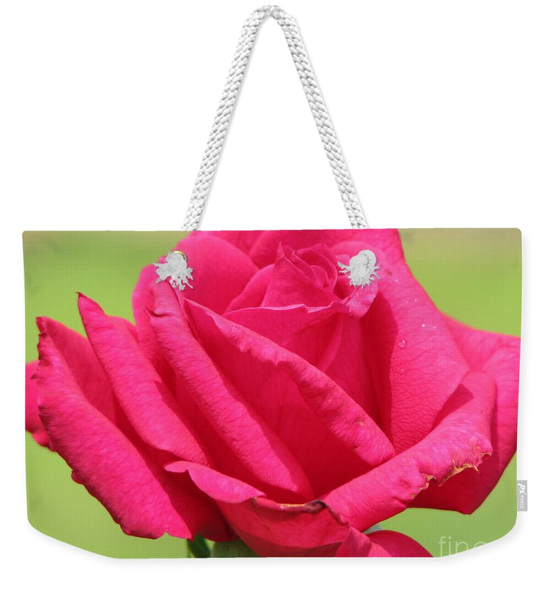 Roses Weekender Tote Bag featuring the photograph The Rose by Amanda Barcon
