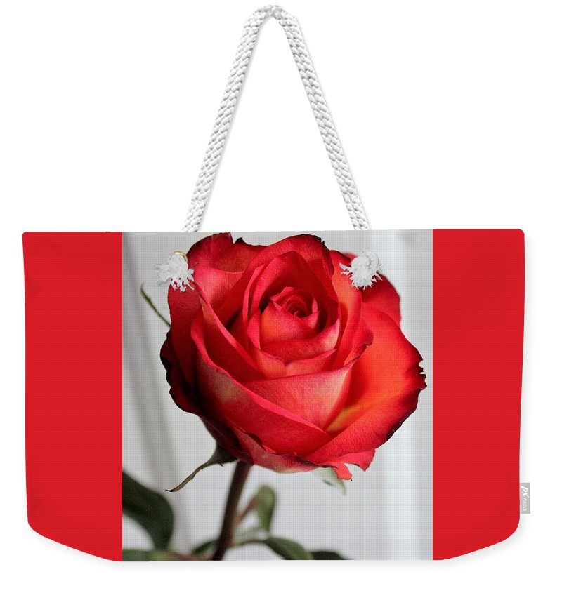 Flower Weekender Tote Bag featuring the photograph The Rose by Mesa Teresita