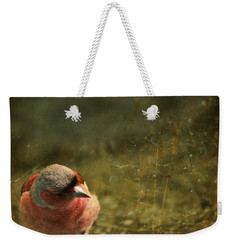 Chaffinch Weekender Tote Bag featuring the photograph The Sad Chaffinch by Angel Ciesniarska