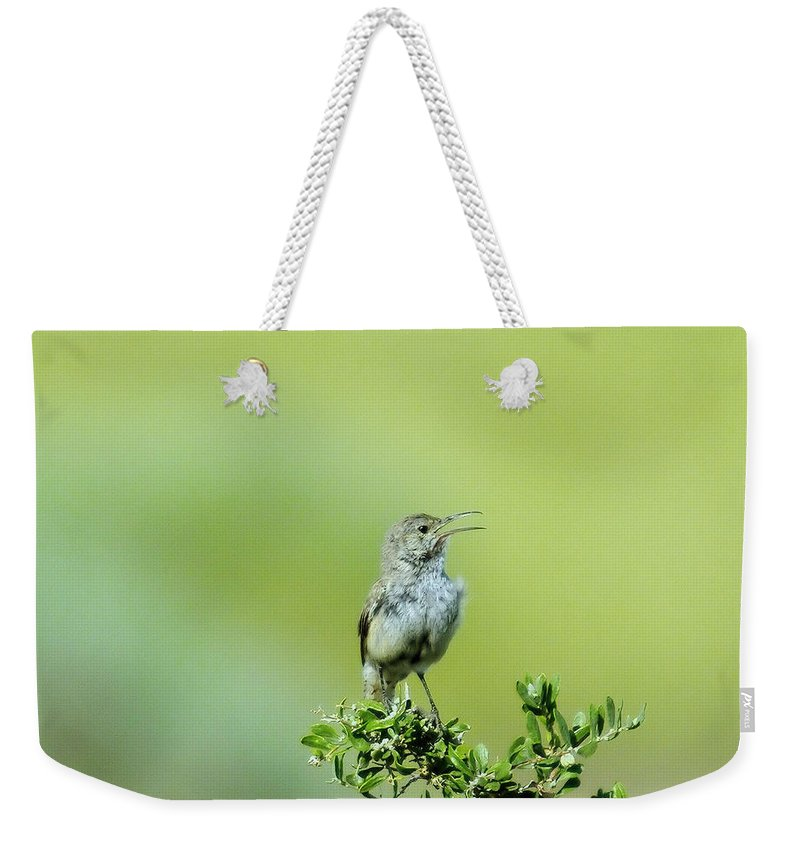 Birds Idaho Birds. Small Birds Weekender Tote Bag featuring the photograph The Singing Birdie by Jeff Swan