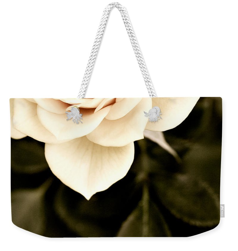 Rose Weekender Tote Bag featuring the photograph The Softest Rose by Marilyn Hunt