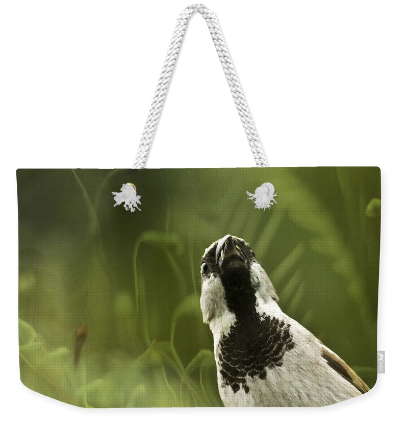 Sparrow Weekender Tote Bag featuring the photograph The Sparrow by Angel Ciesniarska