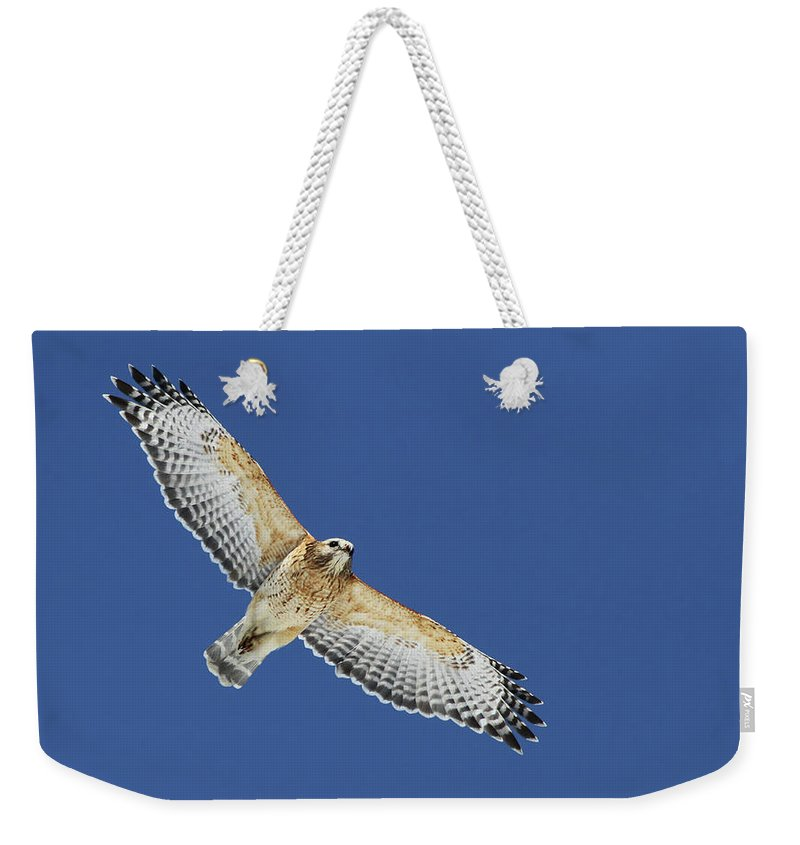 Animal Weekender Tote Bag featuring the photograph The Spirit Of The Hawk by Mircea Costina Photography