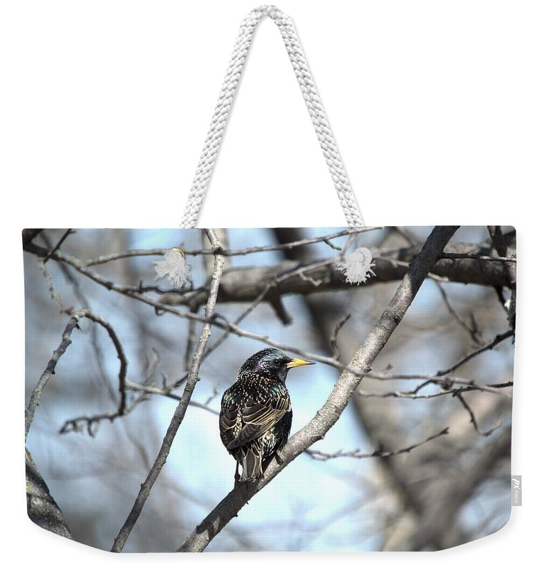 Alone Weekender Tote Bag featuring the photograph The Starling by Bonfire Photography