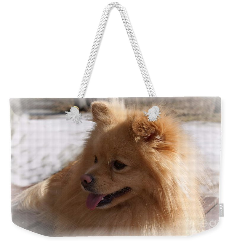 Pomeranian Dog Weekender Tote Bag featuring the photograph The Sun On My Back by Joanne Smoley