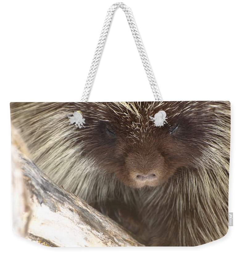 Porcupine Weekender Tote Bag featuring the photograph The Tender Side Of Porcupine by DeeLon Merritt