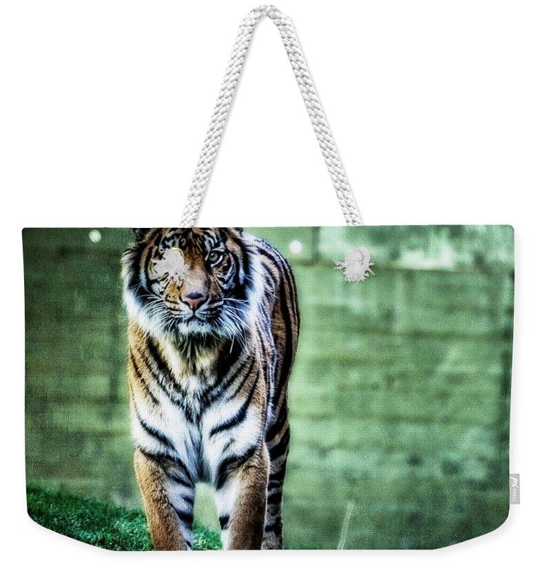 Sumatran Tiger Weekender Tote Bag featuring the photograph The Tigress by Saija Lehtonen
