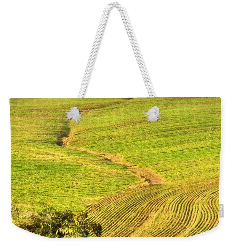 Tree Weekender Tote Bag featuring the photograph The Tree And The Furrows by Silvia Ganora