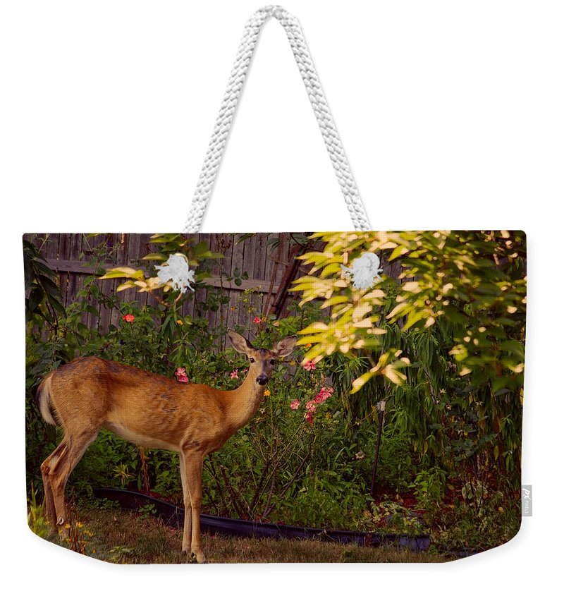 Deer Weekender Tote Bag featuring the photograph The Visit by Mike Smale