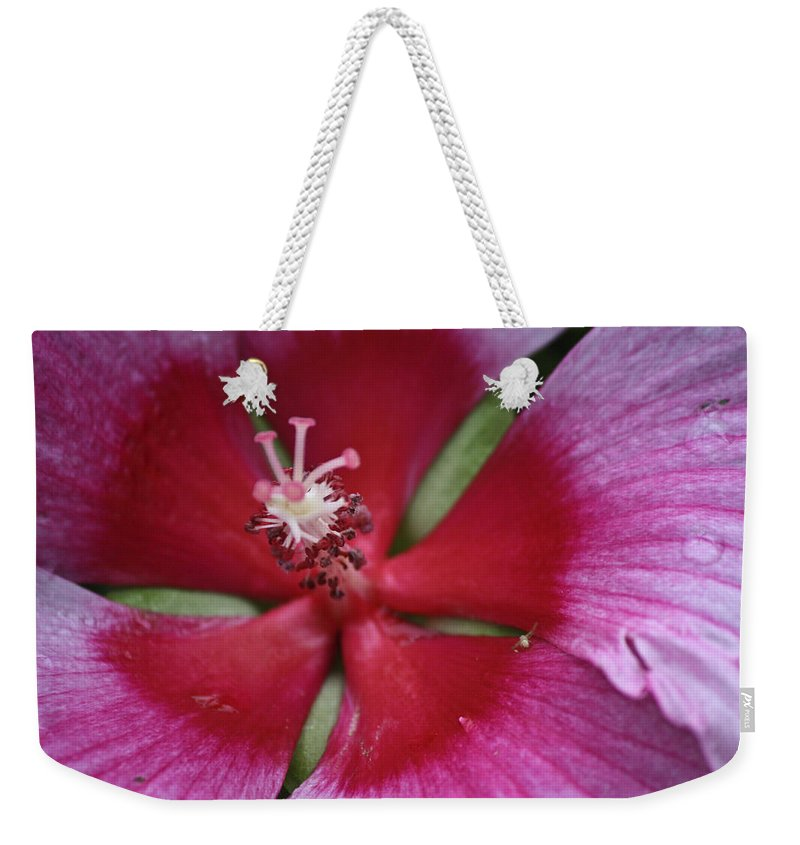 Hibiscus Weekender Tote Bag featuring the photograph The Visitor by Teresa Mucha