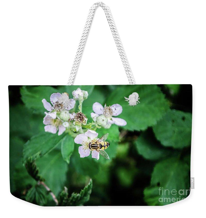 Michelle Meenawong Weekender Tote Bag featuring the photograph The Wasp by Michelle Meenawong