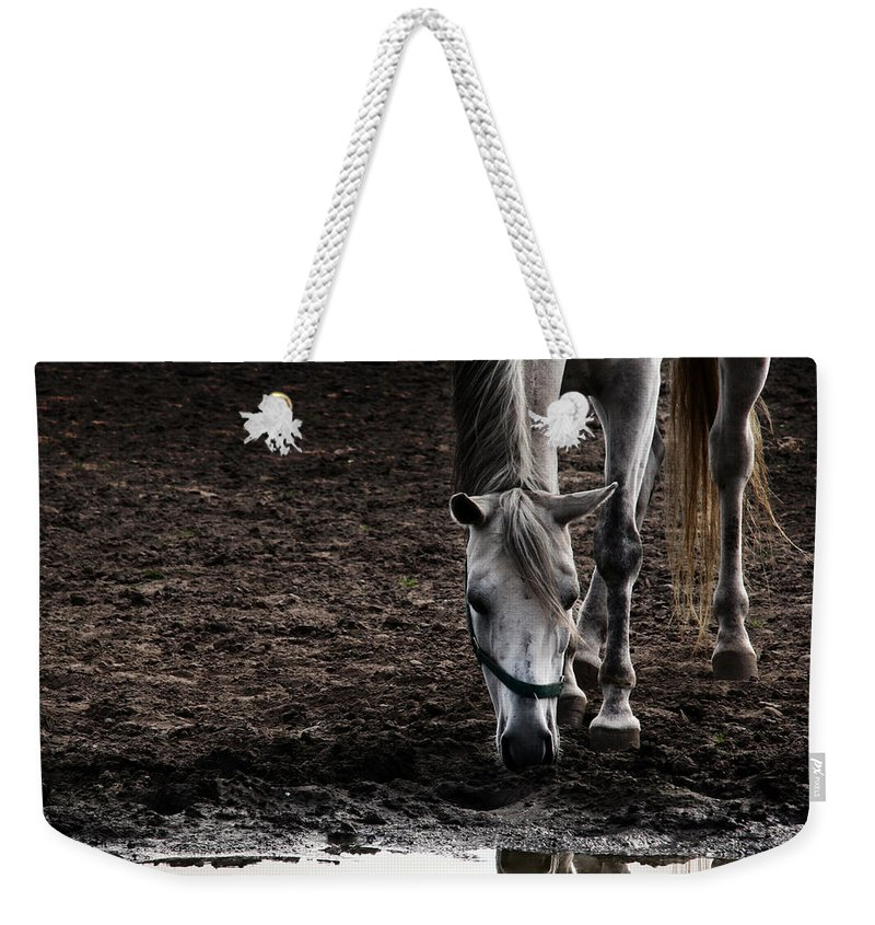 Horse Weekender Tote Bag featuring the photograph The Water Reflection by Angel Ciesniarska