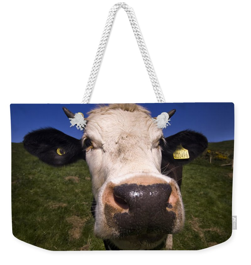 Cow Weekender Tote Bag featuring the photograph The Wideangled Cow by Angel Ciesniarska