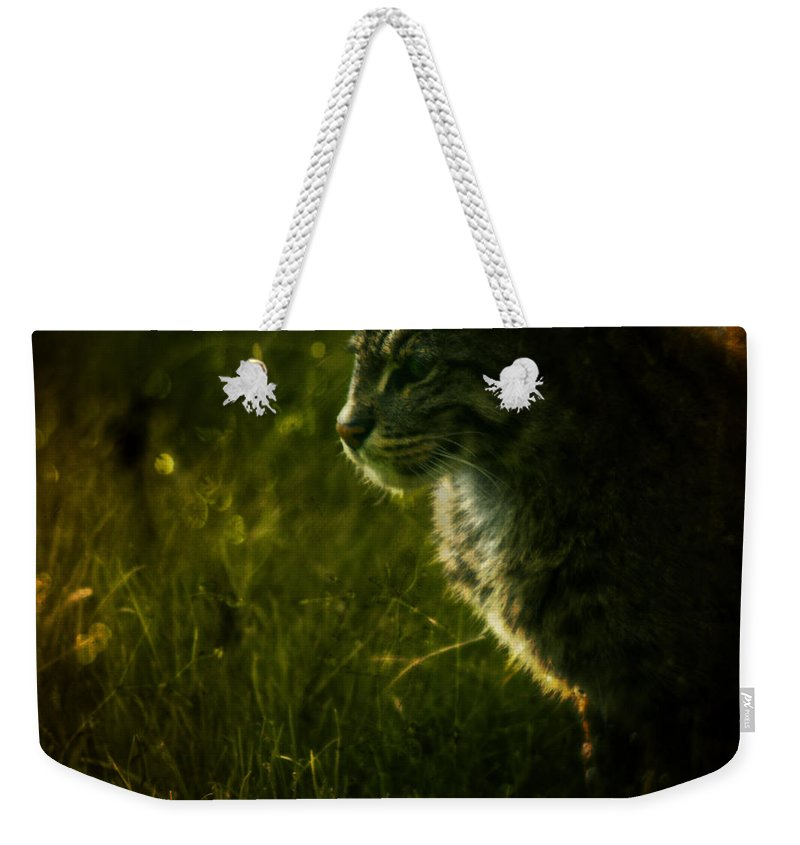 Zoo Weekender Tote Bag featuring the photograph The Wild Cat by Angel Ciesniarska
