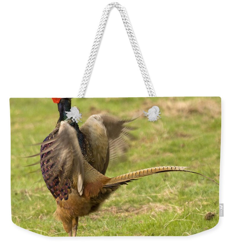 Pheasant Weekender Tote Bag featuring the photograph The Wild Rooster by Angel Ciesniarska