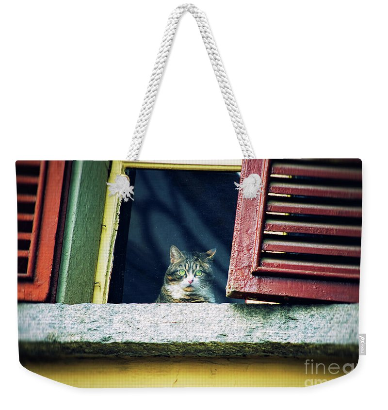 Kitty Weekender Tote Bag featuring the photograph The World Outside by Silvia Ganora